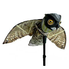 BDXOWL - Bird-xProwler Owl
