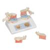 Needles Syringes Biopsy Needles: Fabrication Enterprises - Anatomical Model - Osteoporosis Model