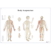 Fabrication Enterprises Anatomical Chart - Acupuncture Body, Paper FNT 12-4602P