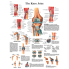 Fabrication Enterprises Anatomical Chart - Knee Joint, Sticky Back FNT 12-4611S