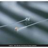 Bard Medical Foley Catheter Bardex 2-Way Standard Tip 30 cc Balloon 24 Fr. Silicone MON 60408EA