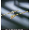 Urological Catheters: Bard Medical - Foley Catheter Bardex Lubricath 2-Way Standard Tip 30 cc Balloon 14 Fr. Hydrophilic Polymer Coated Latex