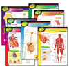 Trend TREND® Learning Chart Combo Pack TEP T38913